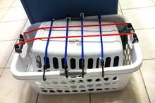 Laundry-Basket-Cat-Carrier