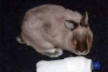 Plastic Bottle Rabbit Cooling
