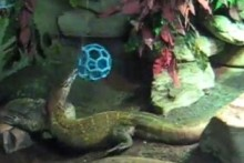 Rubber-Ball-Lizard-Toy