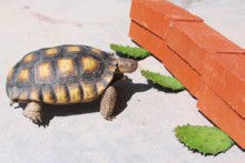 DIY-Cactus-Tortoise-Treat