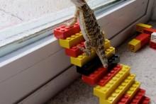 DIY-Lego-Lizard-Stairs