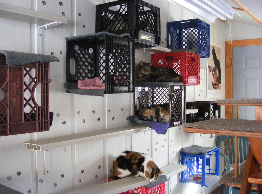 Diy Milk Crate Cat Condo Petdiys Com