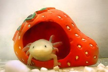 Hamster-House-Axolotl-Hide