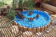 Kiddie-Pool-Duck-Pond