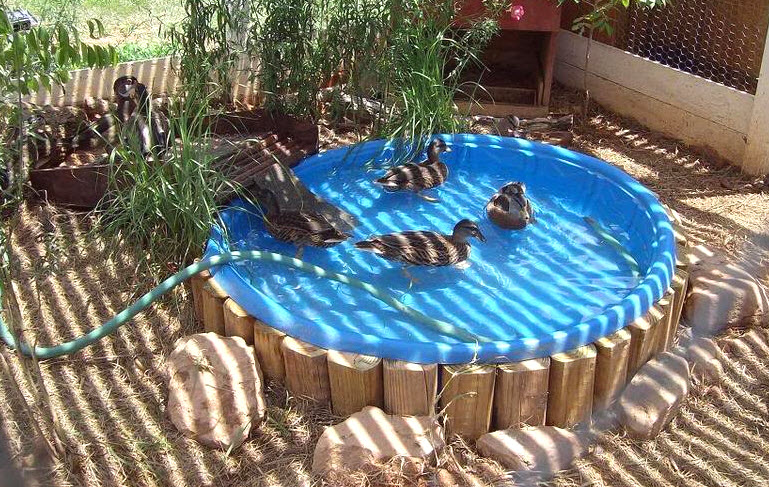Ramp For Duck Pond Images