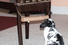 Paper-Roll-Treat-Rack