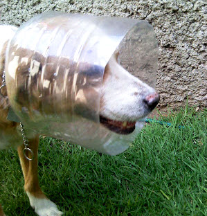 Plastic Bottle Cone Collar Petdiys Com