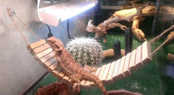 diy bearded dragon bridge hammock   petdiys    rh   petdiys