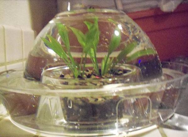 DIY Bottomless Fish Bowl - petdiys.com
