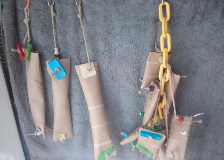 Diy Bird Toys : Diy cardboard foraging tubes petdiys