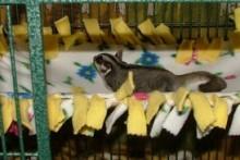 DIY-Fleece-Cage-Shelf