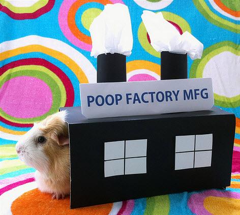 Diy guinea pig factory costume for Diy guinea pig things