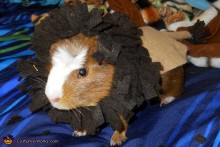 DIY-Guinea-Pig-Lion-Costume