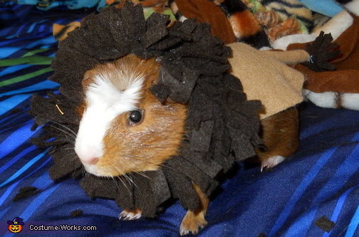 Diy guinea pig lion costume for Diy guinea pig things