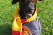 DIY-Harry-Potter-Dog-Costume
