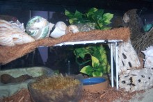 DIY-Hermit-Crab-Second-Level