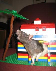 Stupendous Diy Lego Rat House Petdiys Com Home Interior And Landscaping Ponolsignezvosmurscom