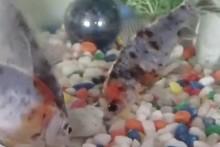 DIY-Stuffed-Shell-Fish-Enrichment