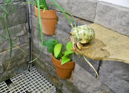 DIY Plant Pot Wall Planter - petdiys.com