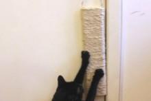 DIY-Door-Hang-Scratcher