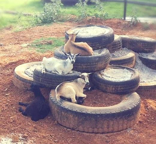 Goat playground ideas the image kid has it for Tire play structure