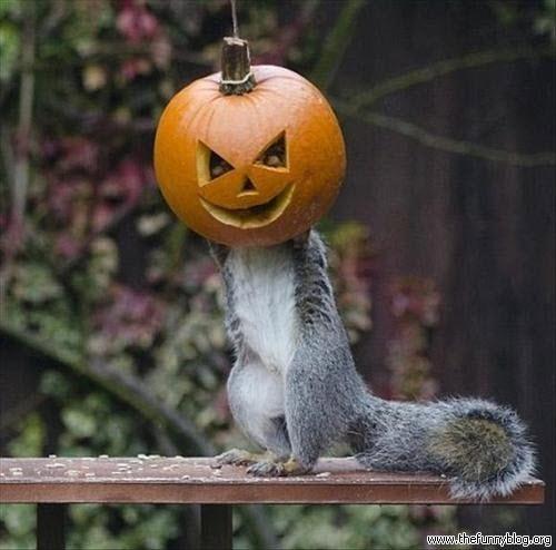 Can A Cat Eat Pumpkin
