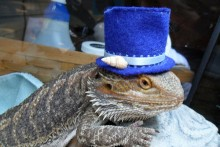 DIY-Lizard-Top-Hat