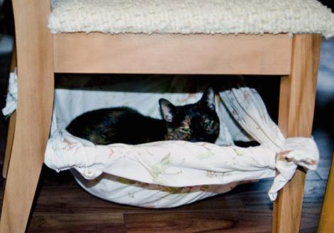diy sheet cat chair hammock   petdiys    rh   petdiys