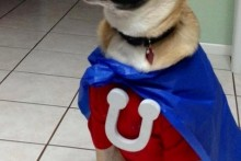 DIY-Underdog-Dog-Costume