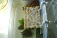 PVC-Turtle-Dock