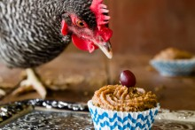 Almond-Butter-Chicken-Cupcakes