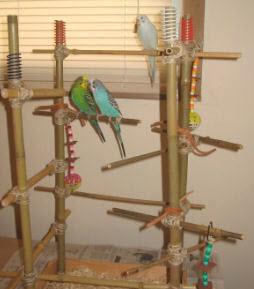 Diy Bamboo Bird Gym Petdiys Com
