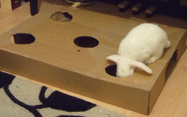 Diy Box Bunny Burrow
