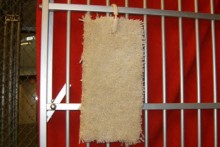 DIY-Carpet-Cage-Scratcher