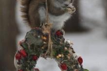DIY-Christmas-Wreath-Feeder