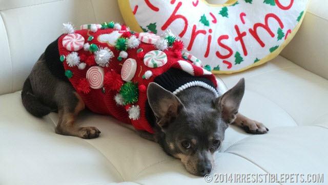 DIY Ugly Christmas Dog Sweater - petdiys.com
