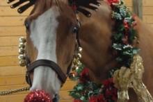 DIY-Horse-Rudolph-Costume