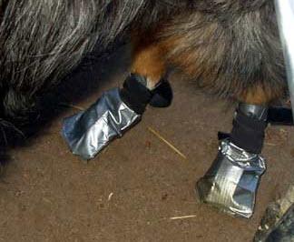 Duct Tape Dog Boots Petdiys Com