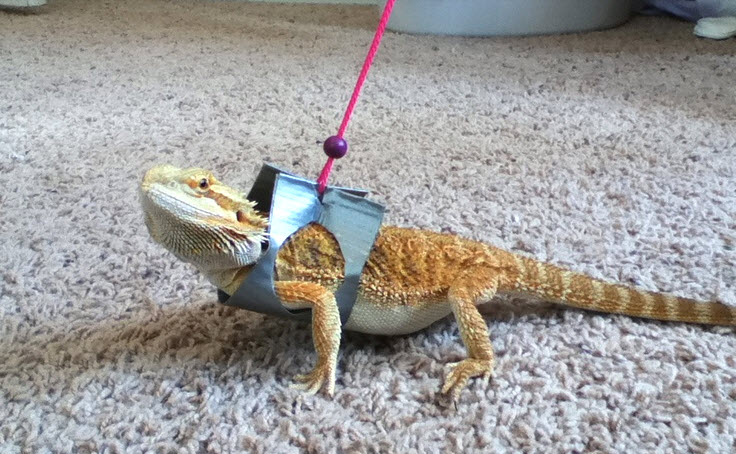 Duct Tape Dragon Harness - petdiys.com