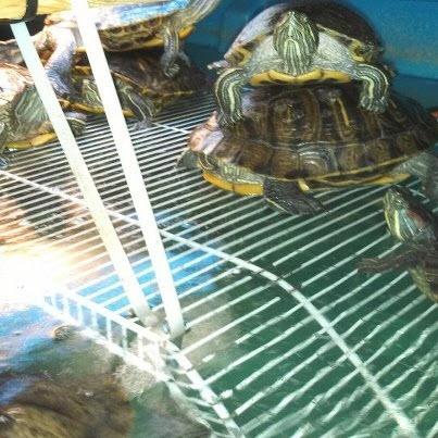 Wire Shelf Turtle Dock Petdiys Com