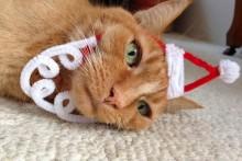 DIY-Cat-Santa-Face-Headband