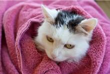 DIY-Cat-Shampoo
