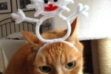 DIY-Cat-Snowman-Headband