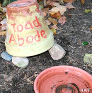 Diy planter toad house petdiys diy planter toad house image credit nwf publicscrutiny Gallery