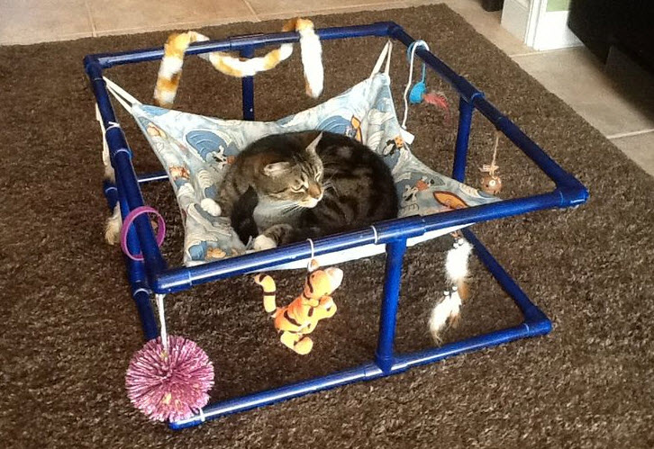 pvc cat hammock   petdiys    rh   petdiys