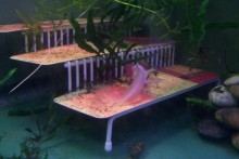 Spice-Rack-Salamander-Sanctuary