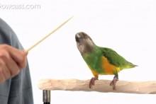 DIY-Bird-Target-Training