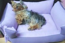 DIY-Dog-Basket-Bed