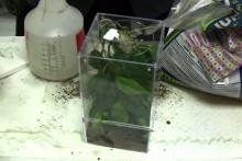 DIY-Tree-Frog-Mini-Enclosure