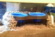 DIY-Pet-Bowls-Crab-Pools
